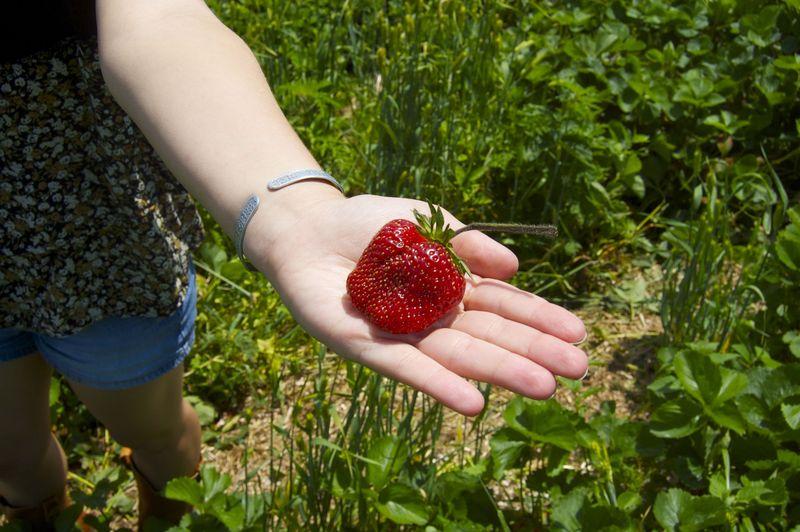 Berryhand